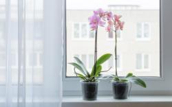 Zaléváte orchideje vodou? My máme pro vás lepší variantu, která prospívá a urychluje růst!