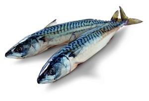 Makrela kuchaná