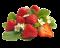 jahody a lesní plody